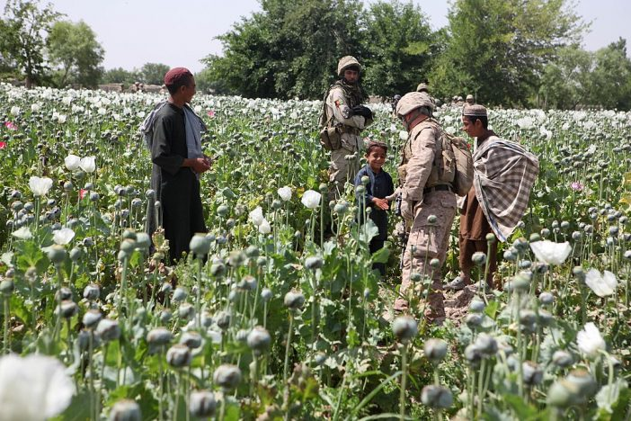 Record Setting Afghanistan Opium Crop Likely To Fuel Violent 2018