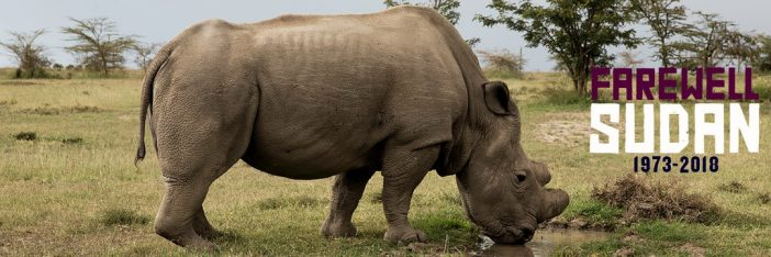 After No Mate Found On Tinder, Last Male Northern White Rhino Dies in Kenya