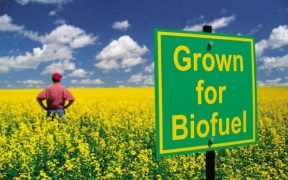 biofuel, corn vs oil, renewable fuel program