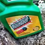 Jury in Deliberation for Case Linking Monsanto Weedkiller to Cancer