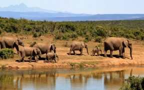 Photo of African elephants at a watering hole