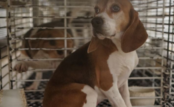 Wisconsin Locals Fight Inhumane Dog Abuse at Research Breeding Facility