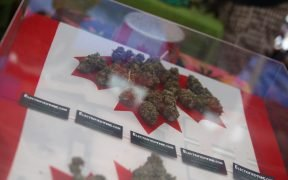 marijuana buds placed on the Canadian Flag