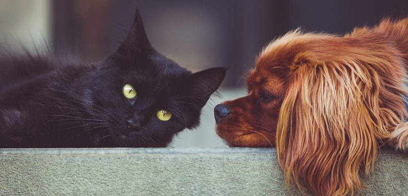 photo of a dog and cat on a bench