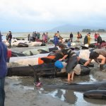 Beached Whales Caused by Unbearable Naval Sonar, New Study Says
