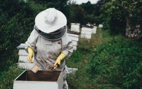 a beekeeper tending to her bees