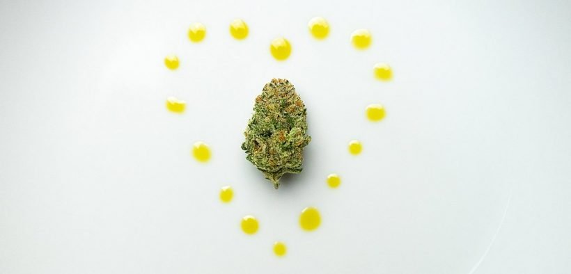 cannabis bud surrounded by cbd oil in a heart shape