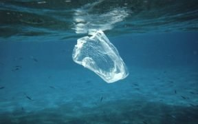 Plastic sandwich baggy floating in the water column. Fish that feed on various salps, jelly-fish, etc. mistake such trash for food and can ingest this with fatal consequences. Compare to images reef2130, reef0859, and reef0556.