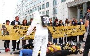 "Green MEPs at a die-in of Bees and Bee keepers in front of the pesticide industry lobby ""Bee Garden"", at the European Parliament in Brussels. The evidence indicates that pesticides such as neonicotinoids are responsible for the mass die off of Bees. (Photo: greensefa)"