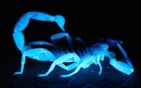 Giant Scorpion (Courtesy of Pixabay)