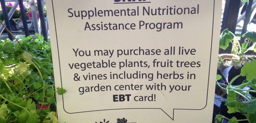 Snap EBT Card Food Assistance Walmart buy vegetable plants and Fruit Trees 7/2014. Pics by Mike Mozart