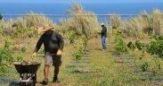 George Cruz coleciona ervas daninhas como Jorge Cristobal, ambos oficiais de conservação voluntários do Inventário Ambiental do Esquadrão Ecológico 36th, espécies de árvores de inventários na Base Aérea de Andersen, Guam, 12 de Abril, 2014. O local é o lar da 17, espécies arbóreas nativas de calcário recém-plantadas, incluindo as árvores Yoga, Ifit e Ahgao. Estas árvores fornecem um habitat vital para o morcego-da-fruta Mariana ameaçado e em perigo. (Foto da força aérea dos EUA / sargento da equipe Melissa B. White / liberado)