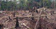 Cortar y quemar la agricultura en la Amazonía