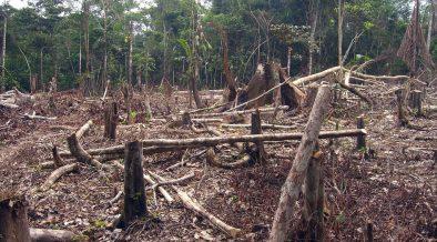 Norway Suspends Donation's to Brazil's Amazon Fund Over Deforestation Spread - Citizen Truth