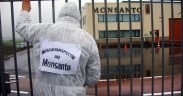 """Public inspection"" of the Monsanto facility at Enkhuizen, Netherlands Date: 2 November 2010, 13:25 (Photo: Luther Blissett)"