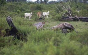 ब्राजील के अमेज़ॅन में वंचित भूमि। (फोटो: जोओ लाएट)