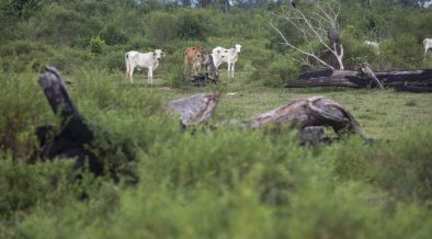 Ontbost land in het Braziliaanse Amazonegebied. (Foto: João Laet)