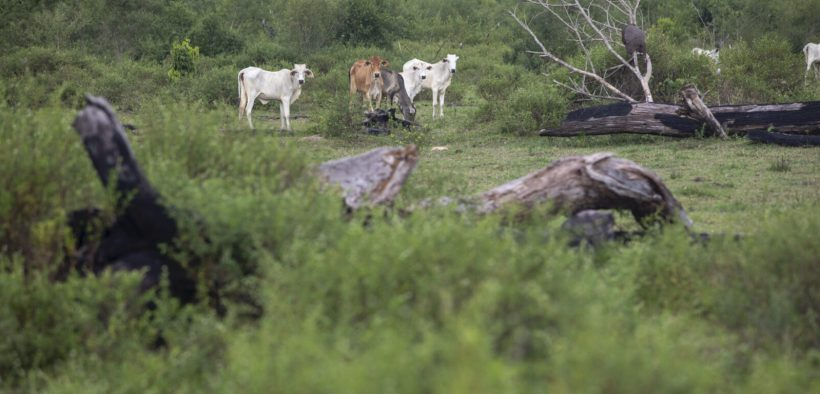 Terras desmatadas na Amazônia brasileira. (Foto: João Laet)