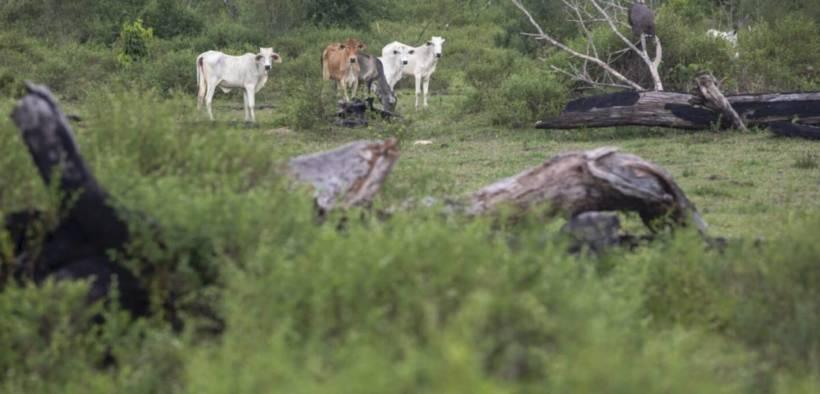 Deforested land in the Brazilian Amazon. (Photo: João Laet)