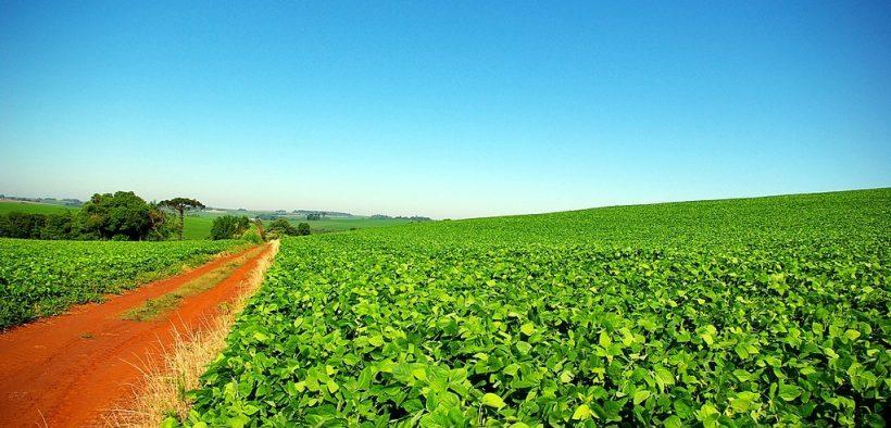 Soybean plantation in Rio Grande do Sul, Brazil.
