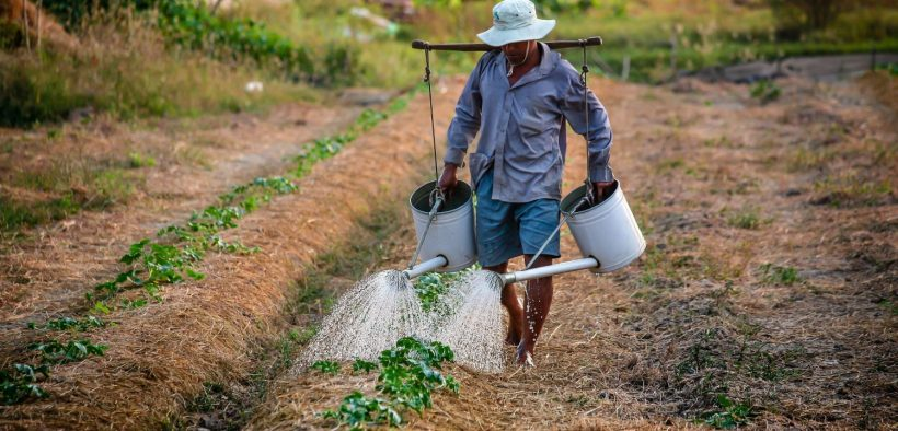 The prices farmers receive for crops do not cover all the costs of keeping farms viable, not to mention the extra costs of ecological or regenerative farming systems. The farm crisis is not over