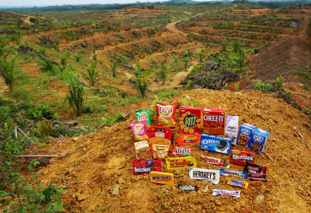 Deforestation for palm oil plantation expansion in Sumatra (Photo: Laurel Sutherlin)