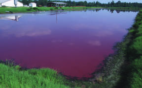 Factory farms contain animal waste in massive open-air lagoons that run the risk of leaking and breaking, contaminating surrounding air and water. (Photo credit: Bob Nichols, USDA Natural Resources Conservation Service/Wikimedia Commons)