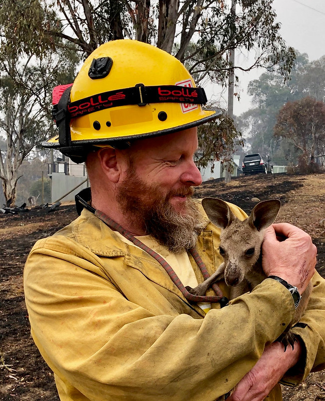 """Fire Captain Dave Soldavini, holds a baby kangaroo, known as a """"Joey,"""" that was rescued from the devastating 2019-20 wildfires in Australia, January 2020. (Forest Service photo)"""