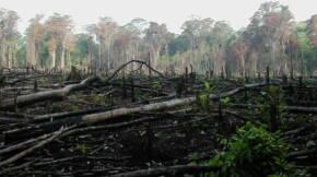 Logging burn e1623255408197